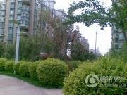 白桦林居外景图