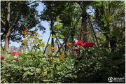 西溪花园实景图