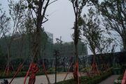 枫华・西湖湾实景图