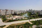 中海城・棕榈湾实景图