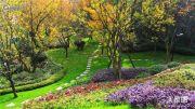 恒大中央公园实景图