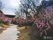 升龙桃花园著实景图