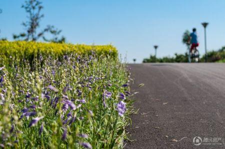 壁纸 成片种植 风景 花 植物 种植基地 桌面 450_298